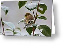 Goldfinch On Branch Greeting Card
