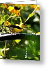 Yellow Finch With A Water Leak Greeting Card