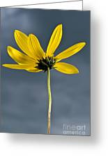 Yellow Flower Against A Stormy Sky Greeting Card