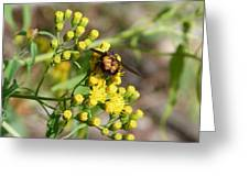 Yellow Flower Bee Greeting Card