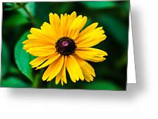 Yellow Flower - Featured 3 Greeting Card
