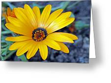 Yellow Flower Helianthus Greeting Card