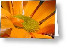 Yellow Flower II Greeting Card