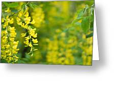 Yellow Flower In The Tree Greeting Card