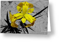 Yellow Flower Greeting Card by Joshua Lucas