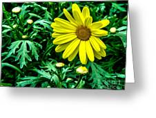 Yellow Flower Of Spring Greeting Card