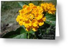 Yellow Flower Greeting Card