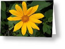 Yellow Flower Petals Greeting Card