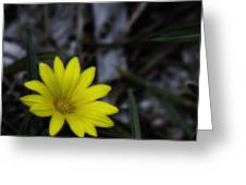 Yellow Flower Soft Focus Greeting Card