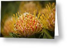Pincushion Protea Veld Fire  Greeting Card