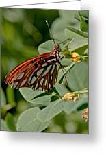 Yellow Flower With Gulf Fritillary Butterfly Greeting Card
