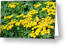 Yellow Flowers 3 Greeting Card