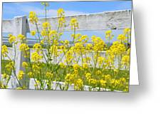 Yellow Flowers And A White Fence Greeting Card