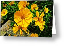 Yellow Flowers Cape Cod Greeting Card