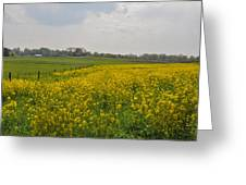 Yellow Flowers In A Field Greeting Card