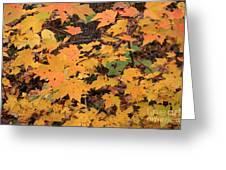 Yellow Foliage Greeting Card