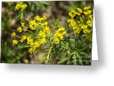 Yellow For Summer Greeting Card