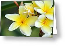 Yellow Frangipani Flowers Greeting Card