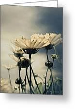 Yellow Gerber Daisy Greeting Card