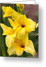Yellow Gladiolus Greeting Card