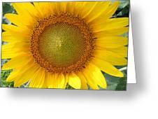 Yellow Glory #1 Greeting Card