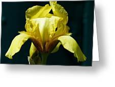 Yellow Glory Greeting Card