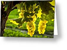 Yellow Grapes In Sunshine Greeting Card