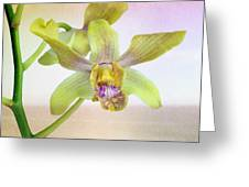 Yellow-green Orchid Greeting Card