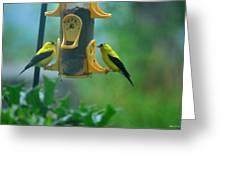 Yellow Grosbeak Duo Greeting Card