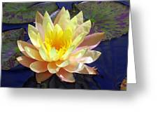 Yellow Hardy Water Lily Greeting Card
