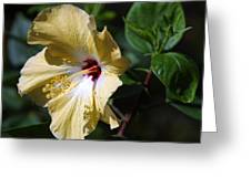 Yellow Hawaiian Hibiscus Greeting Card