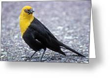 4m09157-02-yellow Headed Blackbird Greeting Card