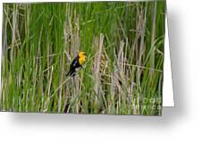 Yellow Headed Blackbird Greeting Card