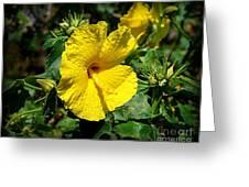 Yellow Hibiscus Hawaii State Flower Greeting Card