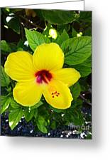 Yellow Hibiscus Too Greeting Card