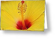 Yellow Hibiscus Up Close Greeting Card