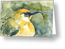 'akiapola'au - Hawaiian Yellow Honeycreeper Greeting Card