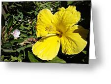 Yellow Hibiscus For Mom Greeting Card