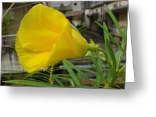 Yellow In Focus Greeting Card