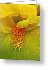 Yellow Iris Beard Greeting Card
