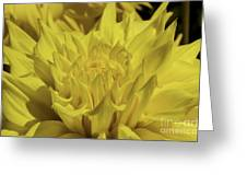 Yellow It Is Greeting Card