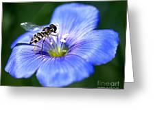 Blue Flax Flower Greeting Card