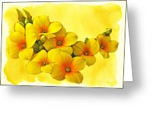 Yellow Kalanchoe - Succulent Sunshine Greeting Card
