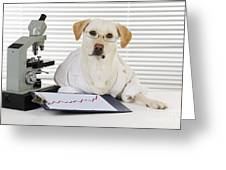 Yellow Lab In Lab Coat Greeting Card