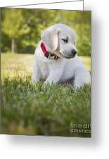Yellow Lab Puppy In The Grass Greeting Card