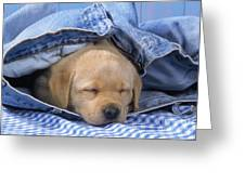 Yellow Labrador Puppy Asleep In Jeans Greeting Card