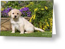 Yellow Labrador Puppy Greeting Card