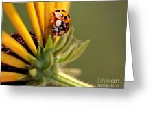 Yellow Lady - 4 Greeting Card