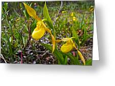 Yellow Lady Slippers Along Emerald Lake Trail In Yoho Np-bc Greeting Card