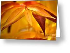 Yellow Leaves At Dawn Greeting Card